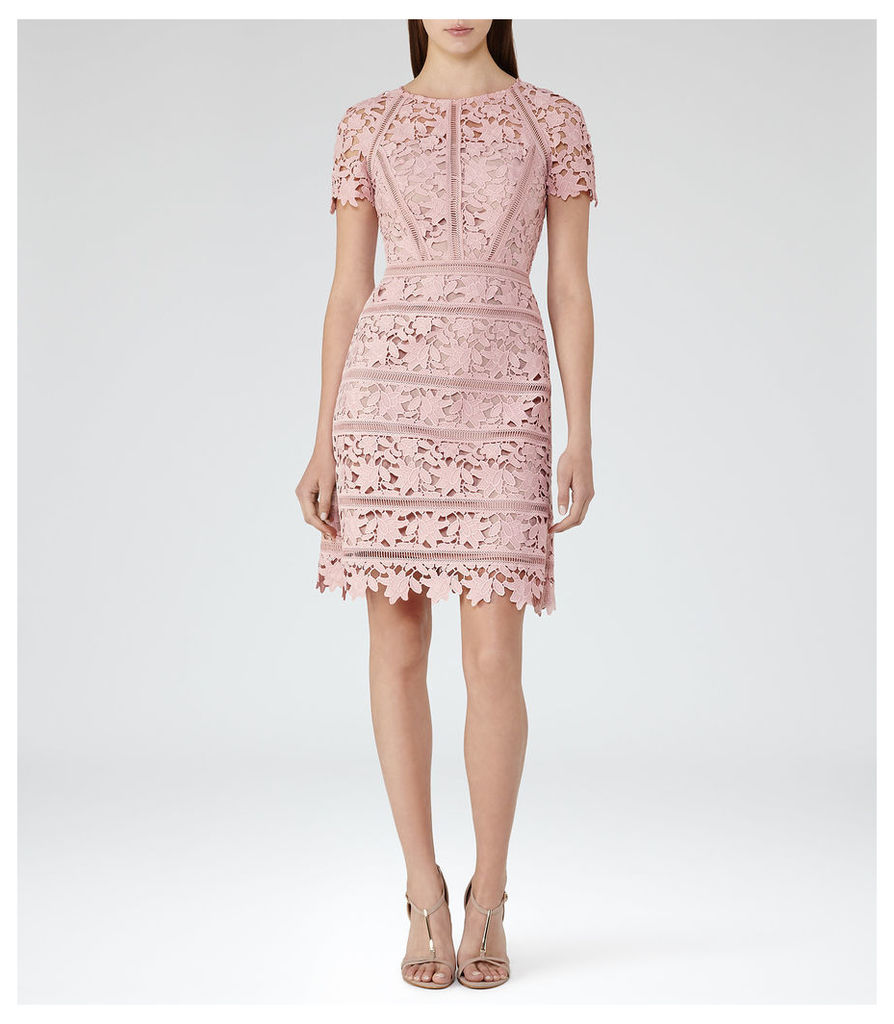 REISS Orchid - Womens Lace Dress in Red