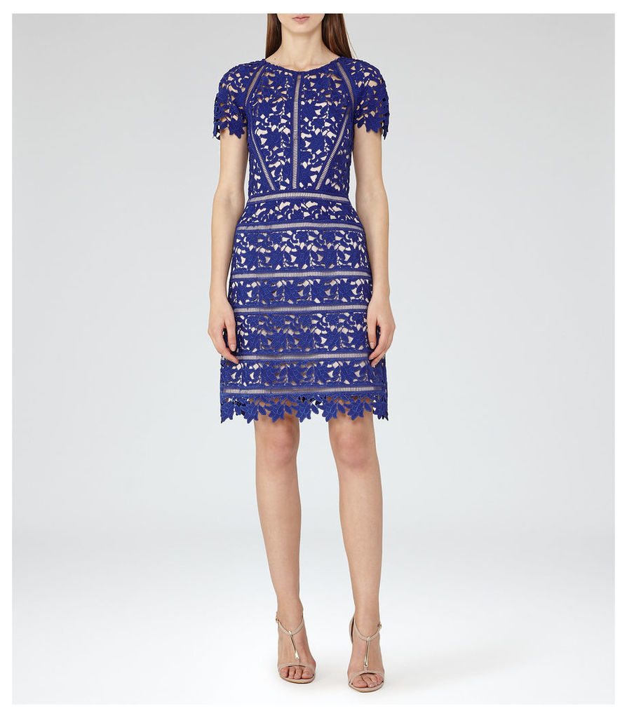REISS Orchid - Womens Lace Dress in Blue