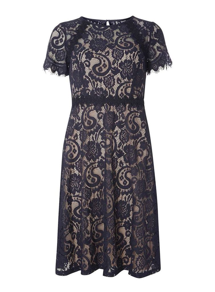 Womens Navy and Nude Scallop Midi- Navy