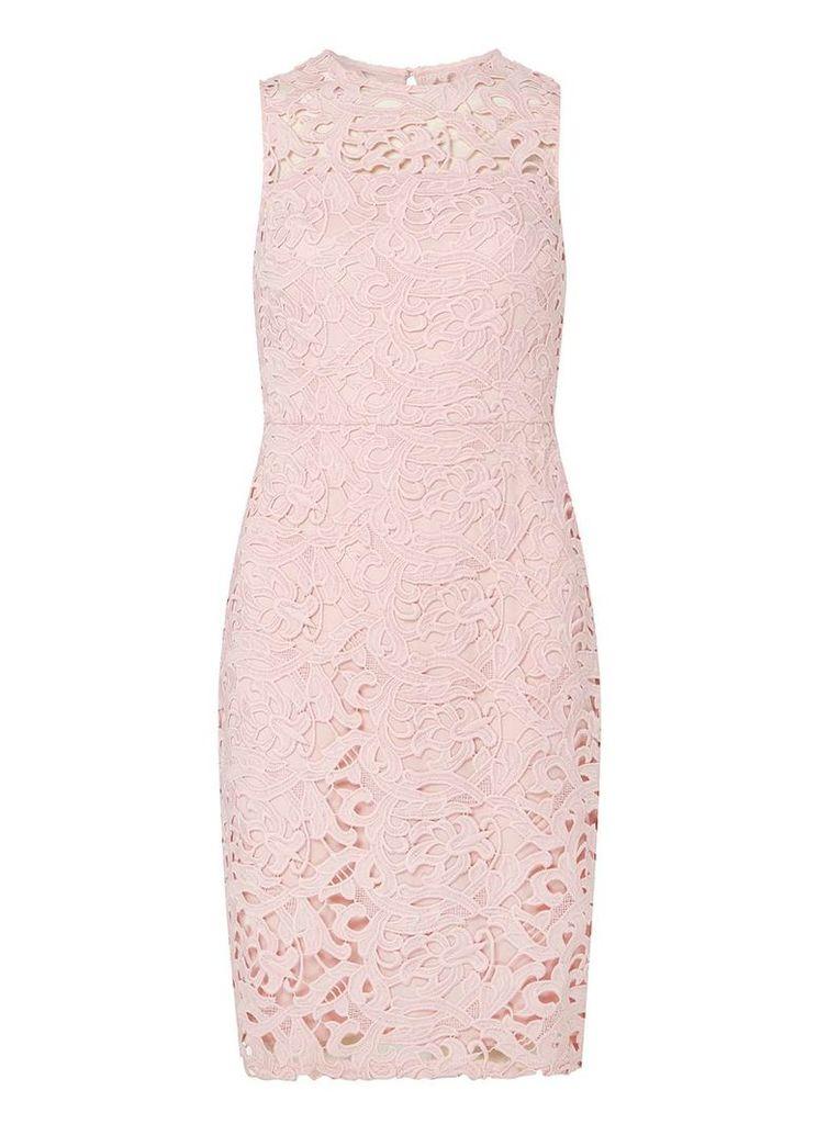 Womens Petite Pink Lace Pencil Dress- Pink