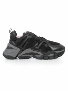 Ash Sneakers Fl