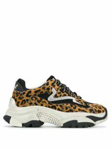 Ash Addict leopard print sneakers - Brown